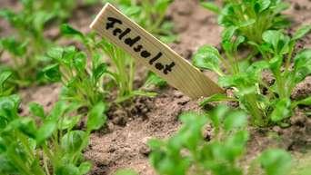 Themenseite Garten. Im August Noch Kahle Stellen Im Gemüsebeet Auffüllen