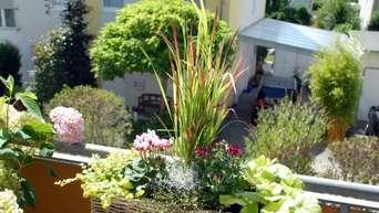 Ein Pflanztipp Für Den Balkon ...