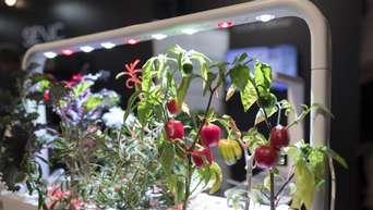 Das Brauchen Kräuter Und Gemüsepflanzen ...