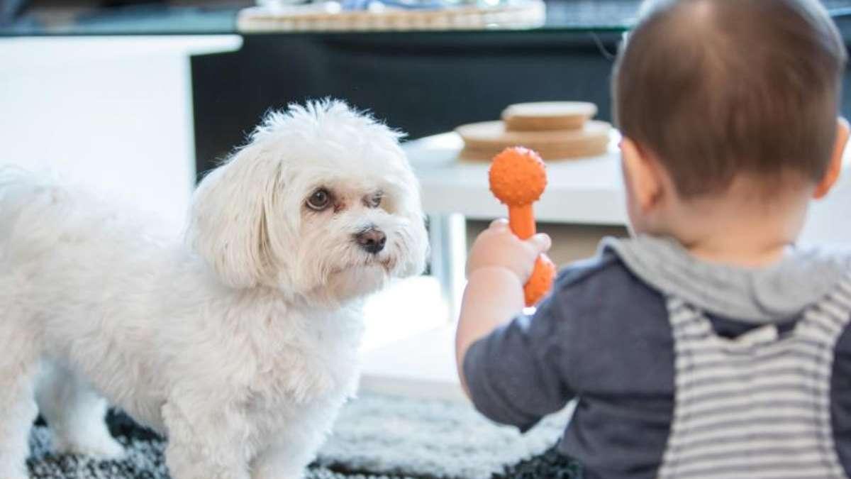 Hunde Für Kleinkinder