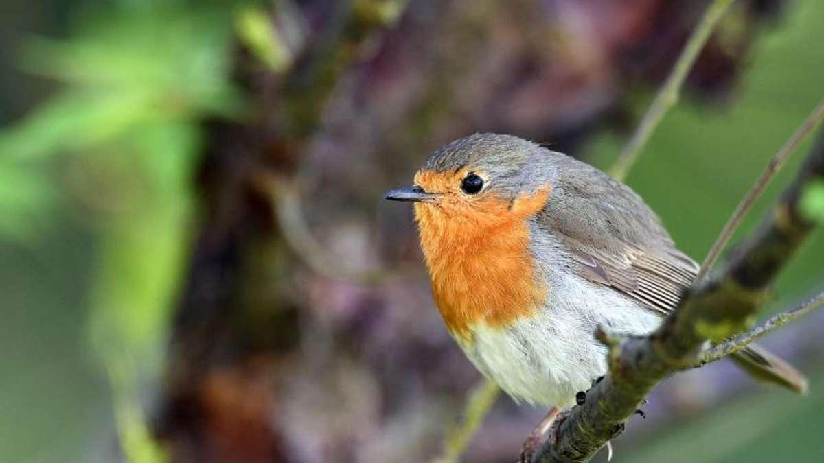 Ohne viel Arbeit zum vogelfreundlichen Garten Wohnen ~ 01095814_Garten Gestalten Ohne Viel Arbeit
